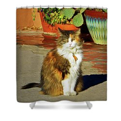 Shower Curtain featuring the photograph Old Town Cat by Nikolyn McDonald