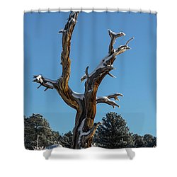 Old Tree - 9167 Shower Curtain