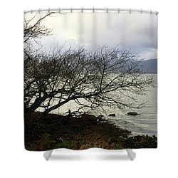 Shower Curtain featuring the photograph Old Tree By The Bay by Chriss Pagani