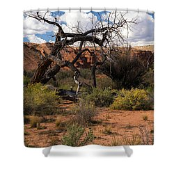Old Tree In Capital Reef National Park Shower Curtain
