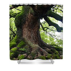 Old Tree In Kyoto Shower Curtain by Carol Groenen