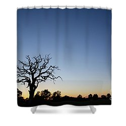 Old Tree Silhouette Shower Curtain