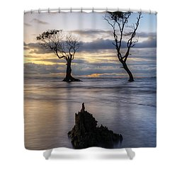 Old Trees Shower Curtain