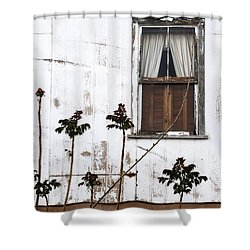 Old Window Tombstone Az Shower Curtain by Mary Bedy