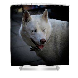 Ole Blue Eyes Shower Curtain by Dennis Baswell
