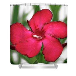 Oleander Blood-red Velvet 1 Shower Curtain by Wilhelm Hufnagl
