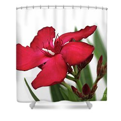 Shower Curtain featuring the photograph Oleander Blood-red Velvet 2 by Wilhelm Hufnagl