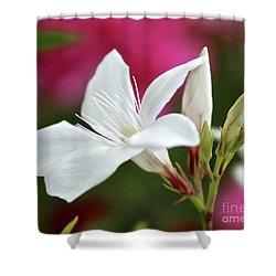 Oleander Casablanca 2 Shower Curtain by Wilhelm Hufnagl