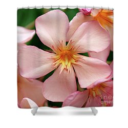 Shower Curtain featuring the photograph Oleander Dr. Ragioneri 1 by Wilhelm Hufnagl