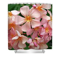 Shower Curtain featuring the photograph Oleander Dr. Ragioneri 3 by Wilhelm Hufnagl