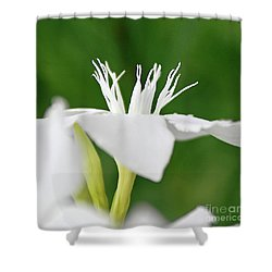 Oleander Ed Barr 2 Shower Curtain