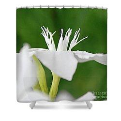 Oleander Ed Barr 2 Shower Curtain by Wilhelm Hufnagl