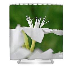 Oleander Ed Barr 1 Shower Curtain by Wilhelm Hufnagl