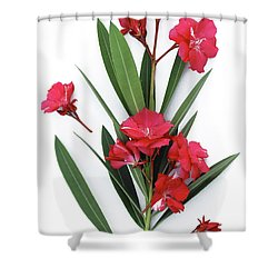 Shower Curtain featuring the photograph Oleander Geant Des Batailles 2 by Wilhelm Hufnagl