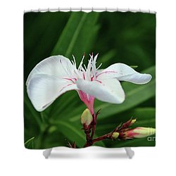 Oleander Harriet Newding  1 Shower Curtain