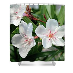 Oleander Harriet Newding 3 Shower Curtain