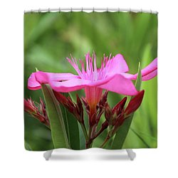 Oleander Professor Parlatore 1 Shower Curtain by Wilhelm Hufnagl