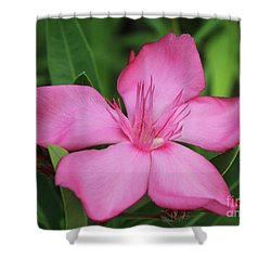 Oleander Professor Parlatore 2 Shower Curtain