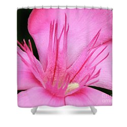 Oleander Professor Parlatore 3 Shower Curtain