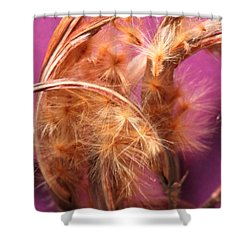 Oleander Seed Pods Shower Curtain by M Diane Bonaparte