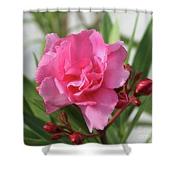 Oleander Splendens Giganteum 1 Shower Curtain