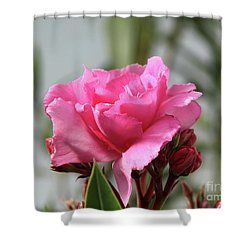 Oleander Splendens Giganteum 2 Shower Curtain