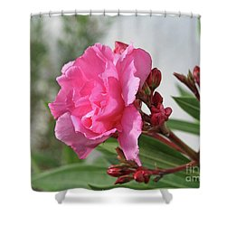 Oleander Splendens Giganteum 4 Shower Curtain