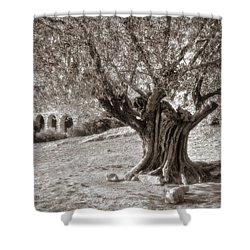Olivo Shower Curtain