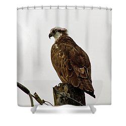 Ollie, The Osprey Shower Curtain