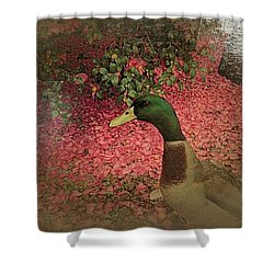 Shower Curtain featuring the painting O'malley by YoMamaBird Rhonda