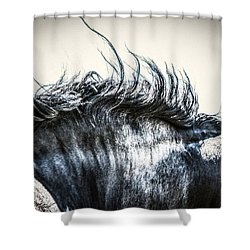 #1240 - Mortana Morgan Mare Shower Curtain