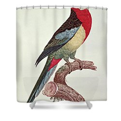 Omnicolored Parakeet Shower Curtain by Jacques Barraband
