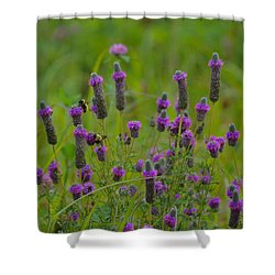 On A Buzzy Summer Day Shower Curtain by Tim Good