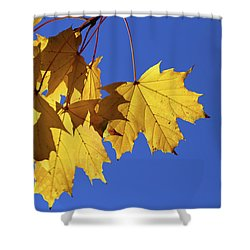 On A Fall Day 1 Shower Curtain