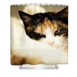 Shower Curtain featuring the photograph On A Furry Pillow by Laura Melis