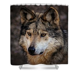 Shower Curtain featuring the photograph On Alert by Elaine Malott