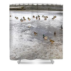 On Ice  Shower Curtain by Leif Sohlman