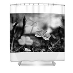 On The Forest Floor  #monochrome Shower Curtain by Mandy Tabatt