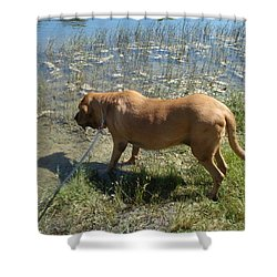 On The Hunt Shower Curtain by Val Oconnor