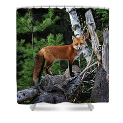 On The Lookout Shower Curtain by Gary Hall