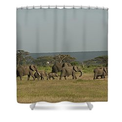 Shower Curtain featuring the photograph On The Move by Gary Hall