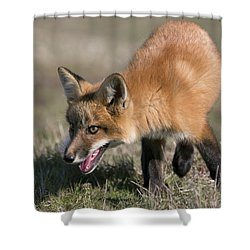 On The Prowl Shower Curtain by Elvira Butler