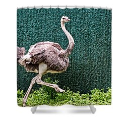 Shower Curtain featuring the photograph On The Run by Debra     Vatalaro