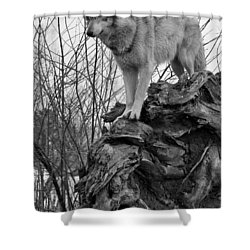 Shower Curtain featuring the photograph On Top by Shari Jardina