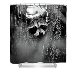 On Watch - Bw Shower Curtain by Christopher Holmes