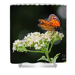 Once Upon A Butterfly 005 Shower Curtain by Robert ONeil