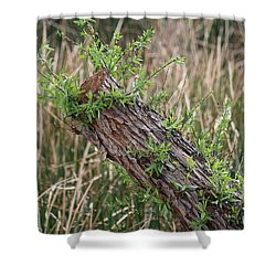 Shower Curtain featuring the photograph Once Upon A Log  by Christy Pooschke