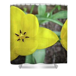 Shower Curtain featuring the photograph One And A Half Yellow Tulips by Michelle Calkins