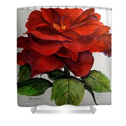 One Beautiful Rose Shower Curtain