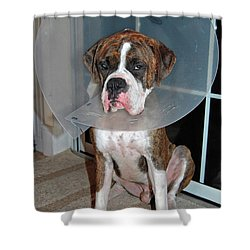 One Biffed Boxer Shower Curtain by DigiArt Diaries by Vicky B Fuller